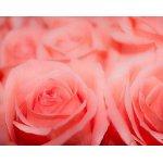 Фотопанно DIVINO C-385 Розы макро (Холст) 300*238